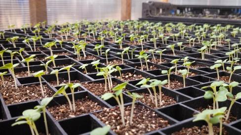 seedlings, farm