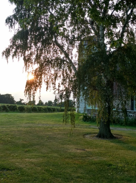silo, tree, sunset